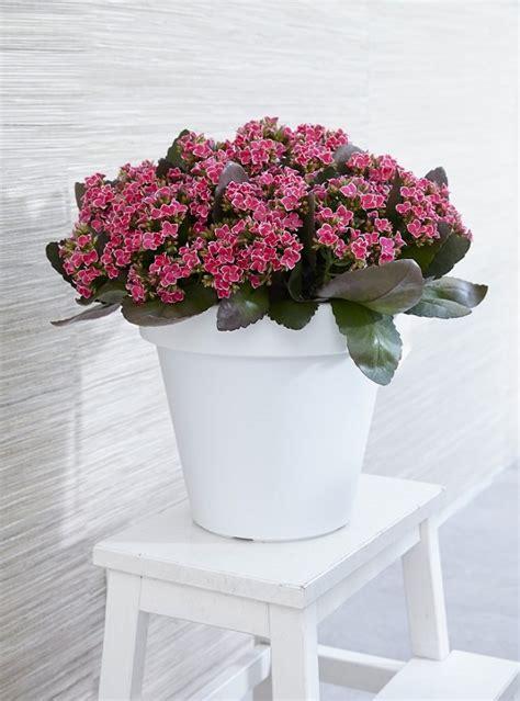 best indoor flowering plants 14 best indoor succulents to grow at home balcony garden web