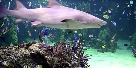 live wallpaper for pc full version turn your apple mac into an aquarium with amazing fish