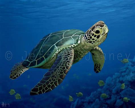 best 25 sea turtles ideas on baby sea turtles baby turtles and turtle