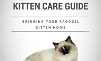 a ragdoll kitten care guide ragdoll cat books archives floppycats