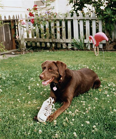 how to keep dog in yard how to keep dogs in yard my web value