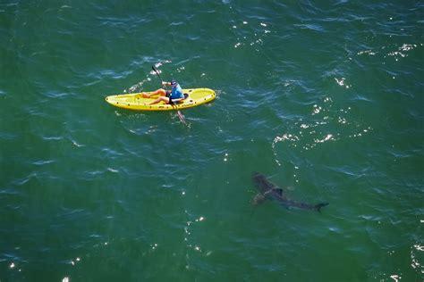 big valley boat orange beach shark attack despite the hype risk along california