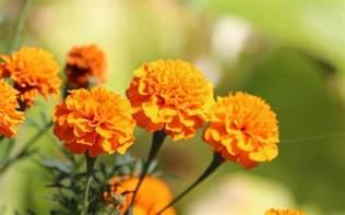 Most Popular Garden Flowers Top 10 Most Popular Flowers To Plant In Your Garden