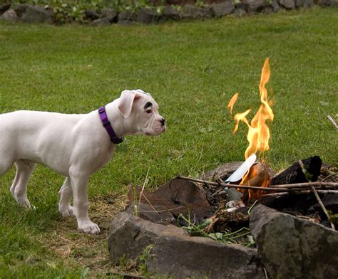 Fireplace Dogs by 9 Ways To Prevent A Pet Related Petsafe 174 Articles