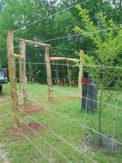 keeping deer    garden  images fence