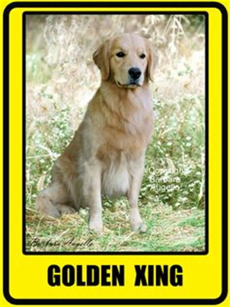 golden retriever garden flag 1000 images about dogs on garden flags golden retrievers and german
