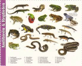 image gallery names of reptiles