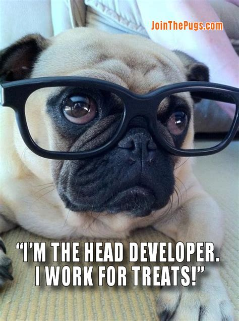 pug to work join the pugs gt pug development update