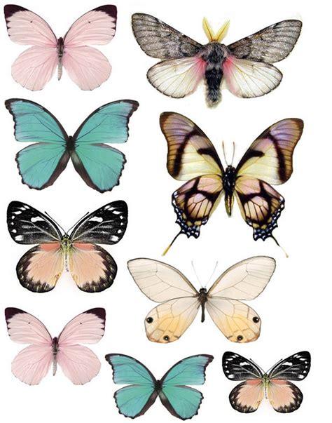 printable images of butterflies forums images graphics butterflies swirlydoos