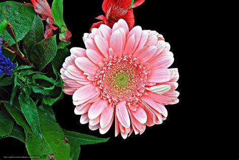 flora fiori scaricare gli sfondi fiore impianto flora sfondi gratis