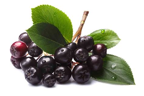 types  berries   health benefits nutrition