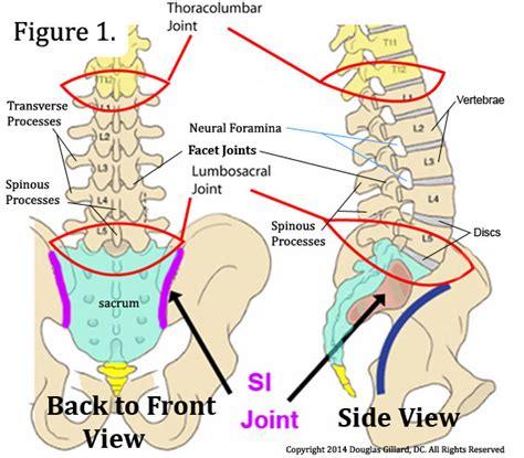 lumbar 4 and 5 diagram your l4 l5 vertebrae clearview chiropractic