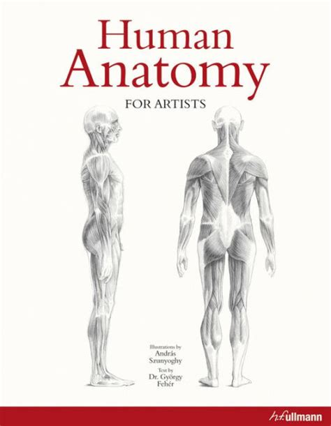 human anatomy coloring book barnes noble human anatomy for artists by andras szunyoghy paperback
