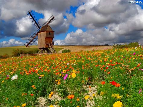 Beautiful Flower Pictures by
