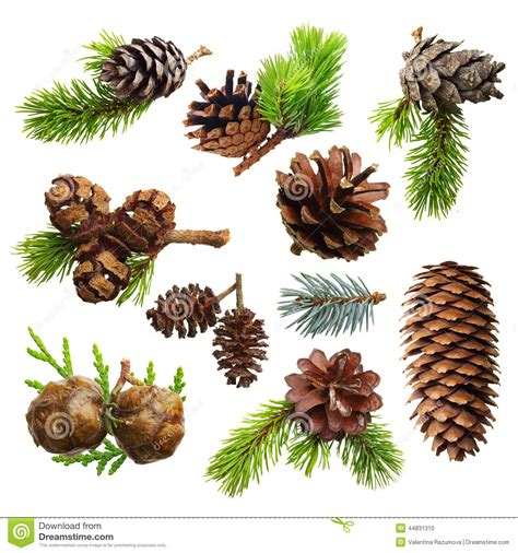 Pinecone Decor Set Of Fir Evergreen Tree Branches And Cones Stock Photo