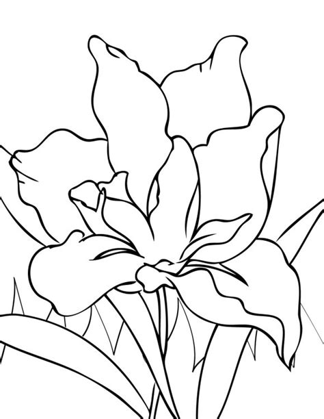 luau flower coloring page 25 flower coloring pages to color