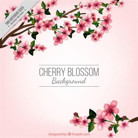 cherry blossom pics cherry blossom background vector free