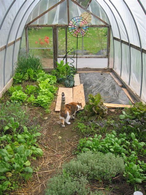 hoop house gardening in winter winter gardening series 7 hoop houses