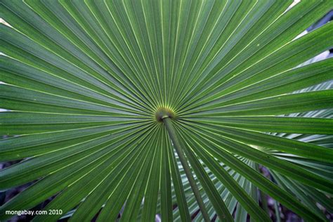 plants in tropical forest rainforest plants tropical rainforest plants