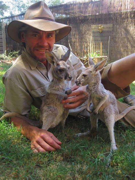 doodlebug orphaned baby kangaroo australian is quot surrogate quot to orphaned baby kangaroos
