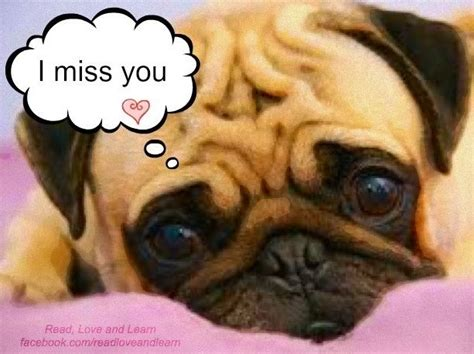 i miss you pug pin by kelsey higgins on