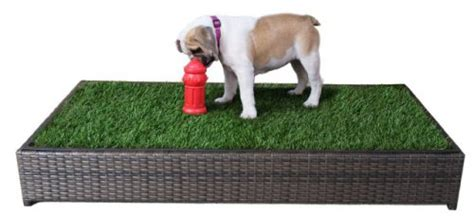 dog toilets in house 5 best indoor doggy potty solutions to free you from the leash petslady com
