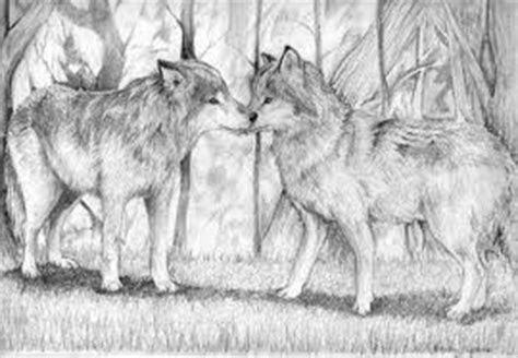 bonded pair cascadia wolves books amaroq weiss wolves and writing