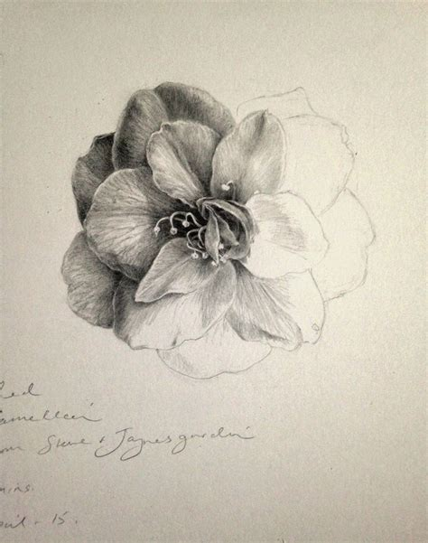 botanical drawing using graphite best 25 graphite drawings ideas on