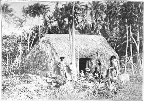 the indigenous trees of the hawaiian islands classic reprint books file hawaiian grass huts in the woods c 1901 jpg