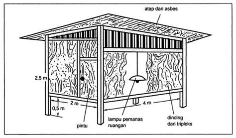 Bibit Itik Medan ilmu budidaya peternakan indonesia jenis dan model kandang itik