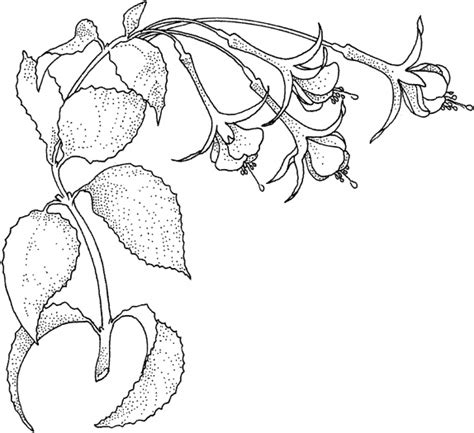 coloring pages of jungle flowers rainforest flowers coloring pages color on pages