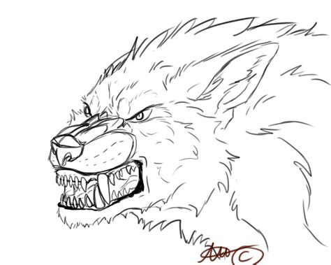 step 10 how to draw a werewolf transformation werewolf cool drawings of werewolves www imgkid com the image