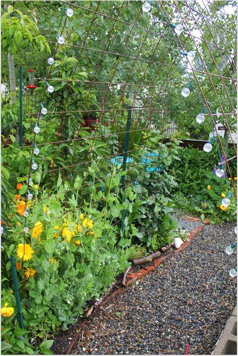 vertical garden trellis vertical gardening with concrete wire mesh grow resist