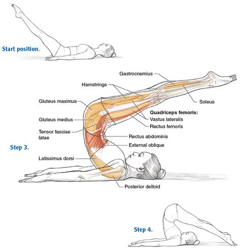 pilates anatomy fine articulation for a flexible spine pilates anatomy