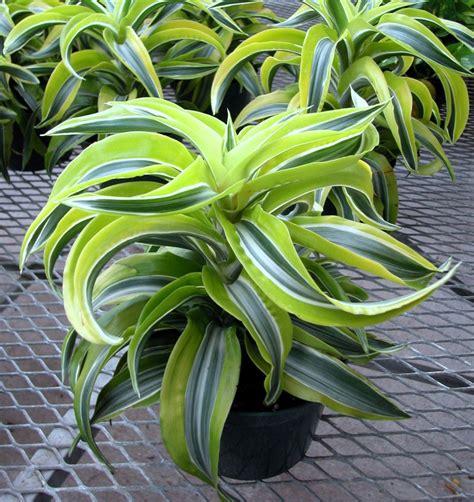 Plantes D Intérieur Sans Lumiere by Plante Pour Salle De Bain Sans Lumiere Interesting Salle