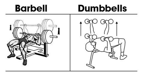 barbell or dumbbell bench press ส ขภาพ แบบฝ กเวทเทรนน ง