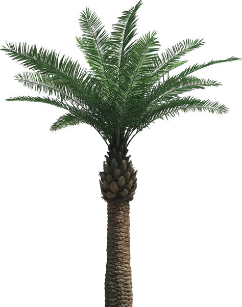 S Well Bottle by Free Palm Tree Removal Foundation Masters Llc