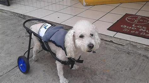 silla ruedas para perros silla de ruedas para perro 1 100 00 en mercado libre