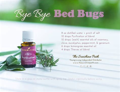 peppermint oil bed bugs 25 best ideas about bed bug remedies on pinterest bed