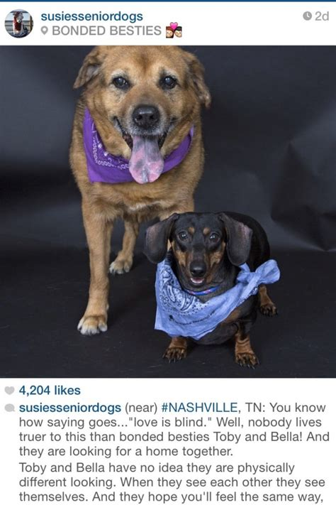 susies senior dogs 7 dogs you need to follow on instagram