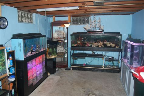 room fish cichlids half of my basement fish room almost finished