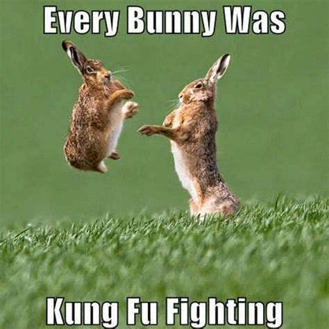 Funny Easter Bunny Memes - 27 very funny bunny pictures