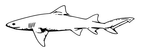 Shark Line Drawing - ClipArt Best