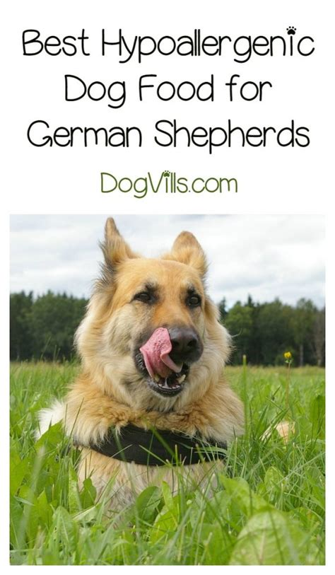 best puppy food for german shepherd best hypoallergenic food for german shepherds dogvills