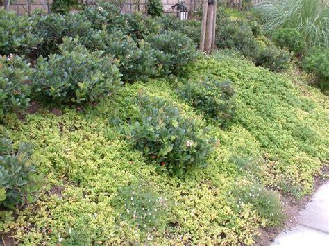 dense shrubs and groundcover