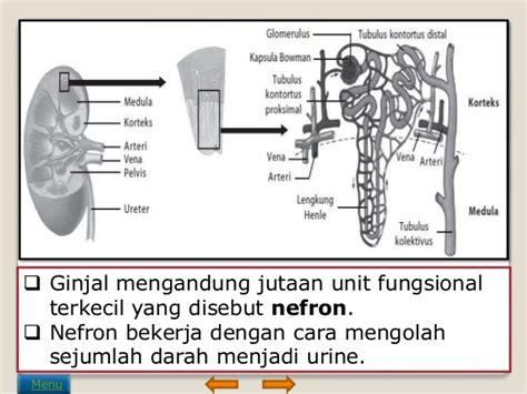 bio urine adalah sistem ekskresi pada manusia