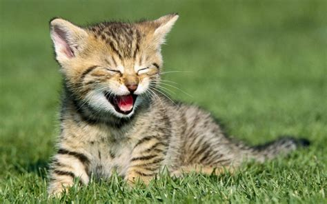 google images of cats kitten laughing pictures animal