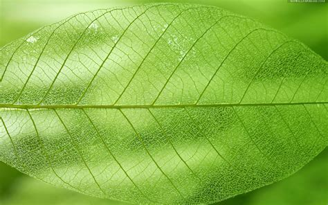 leaf texture clipart   cliparts  images  clipground