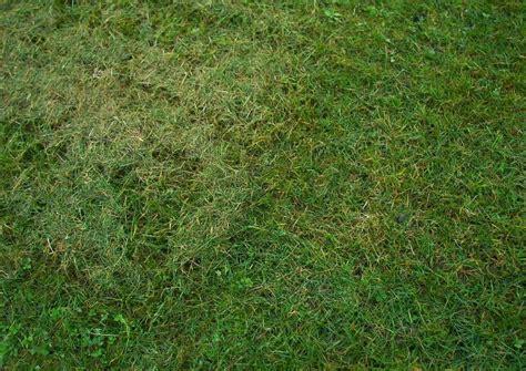 Mulchen Mit Normalen Rasenmä 4278 by Rasenpflege Worauf Kommt Es An