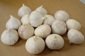 Bawang Putih Lanangtunggal manfaat bawang putih tunggal bagi kesehatan